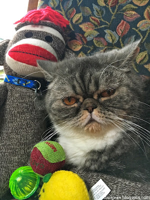 Popoki the cat and her toys