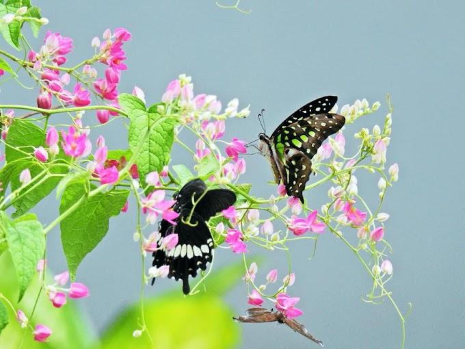 Thiền Osho - Cảm xúc và trí năng tựa như đôi cánh, khi chúng ta chỉ dùng một cánh, hậu quả sẽ là sự thất vọng