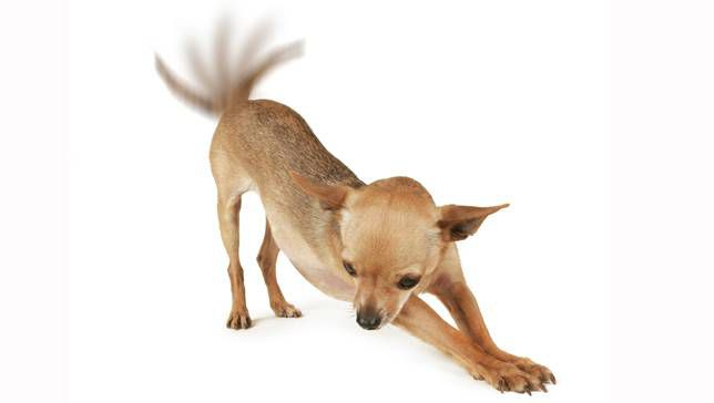 Dog with waging tail