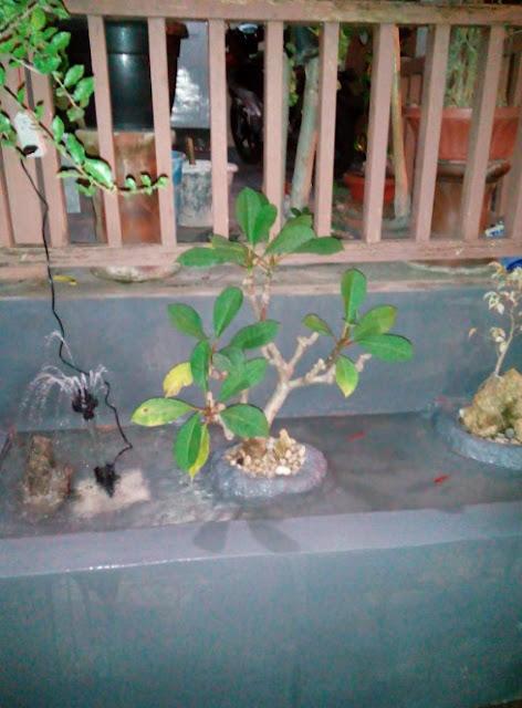 cara membuat kolam ikan minimalis di lahan sempit