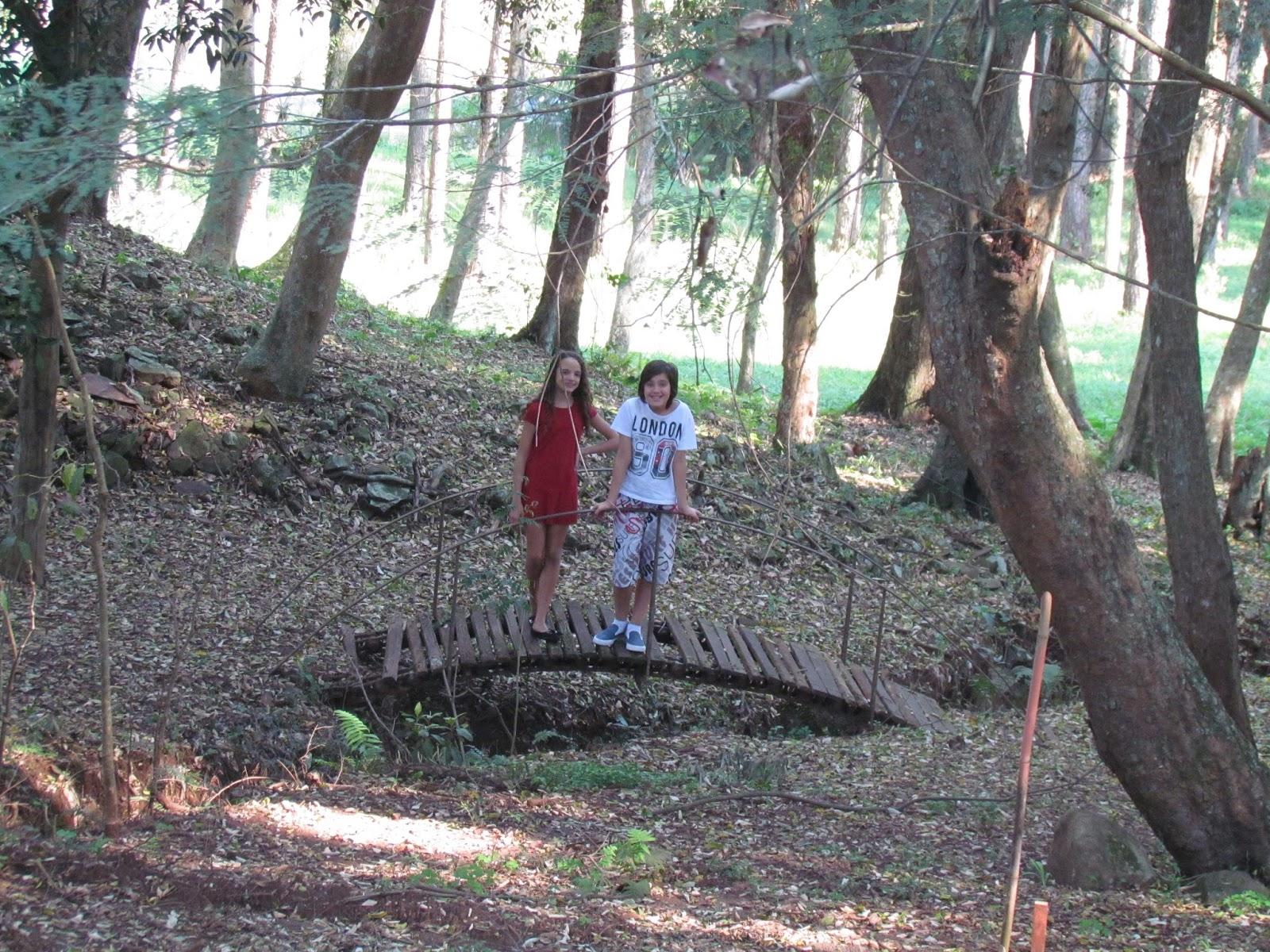 Bosque em Dois Irmãos