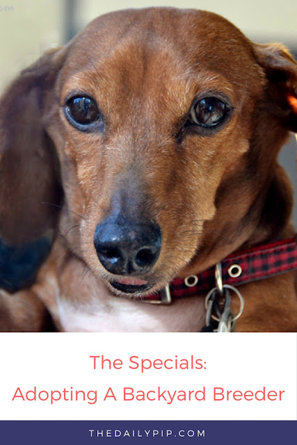 The story of Lilly, a dog with autoimmune issues, and how she found a wonderful home.