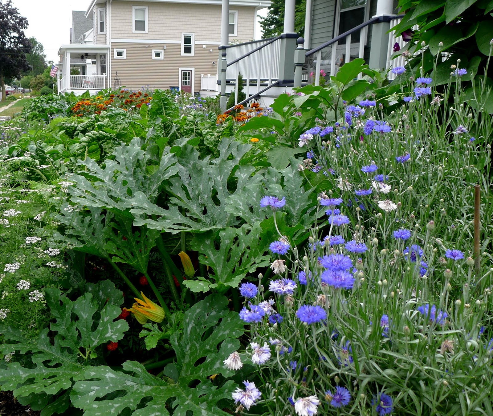 Less Noise, More Green: Edible Landscaping: Replacing