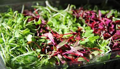 Microgreens Kubis Merah Bisa Mengurangi Risiko Penyakit Jantung