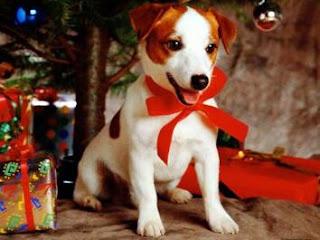 O que dar de natal para namorada - animal de estimação