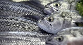 Τα εννιά ψάρια που καλύτερο θα ήταν να τα αποφεύγετε…
