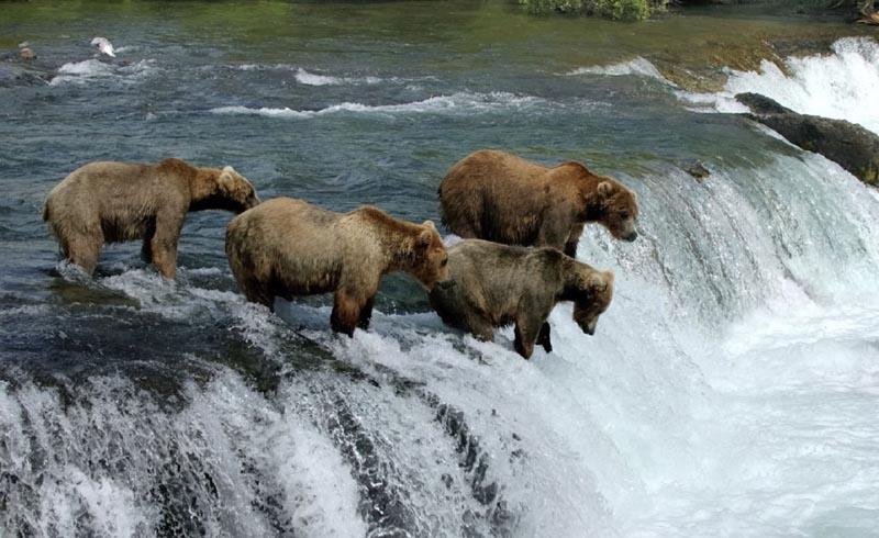 Adventure Travel, Wildlife Travel, Nature Travel, Alaska