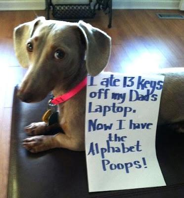 Dog Shaming! i ate the key off the laptop