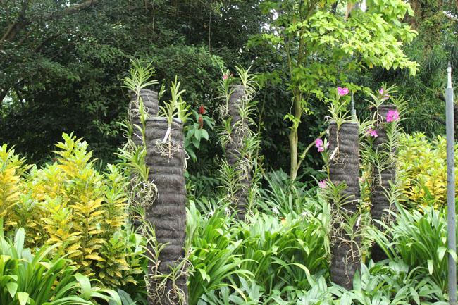 Bella vegetación a los lados