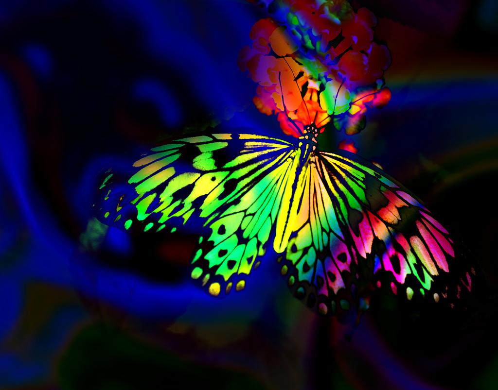 Butterfly Wallpaper Rainbow Butterfly Wallpaper Hd: Desktop Wallpapers