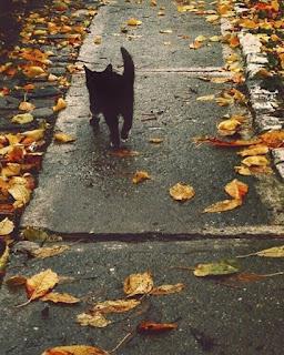 samhain halloween all hallows ognissanti