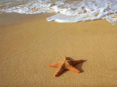 Estrella de mar en la arena, junto a la orilla