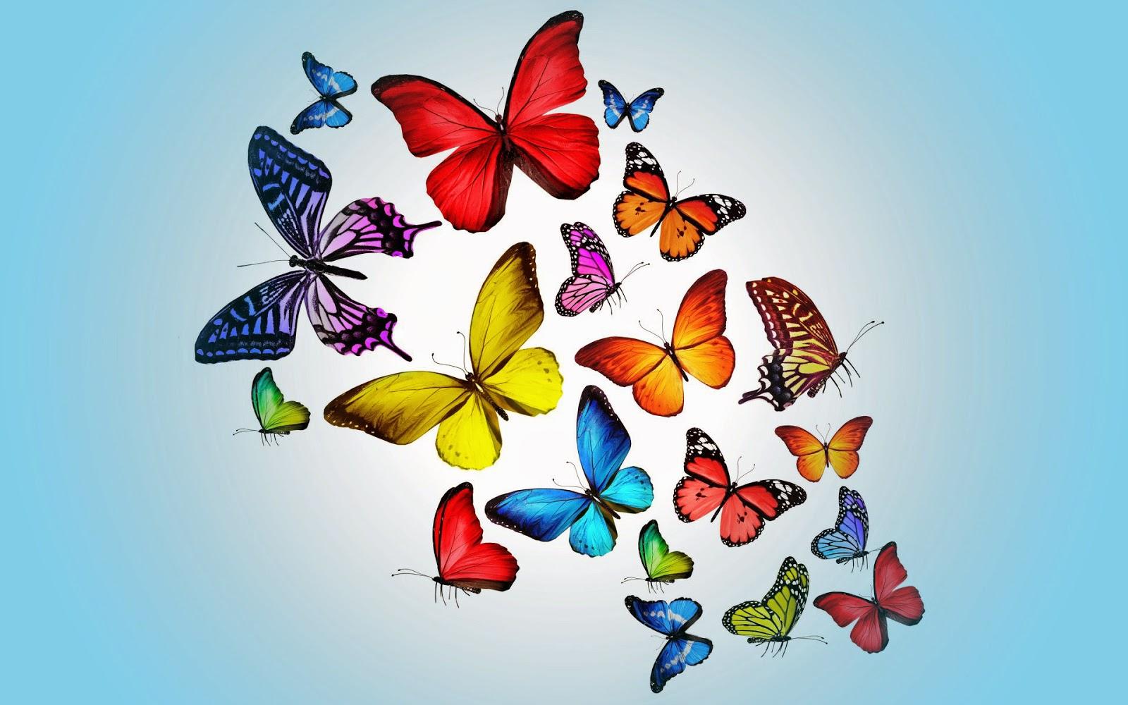 Verschillende soorten vlinders in diverse kleuren