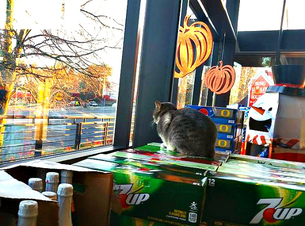 cecil the grocery store cat