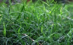 Rumput Baru Dicabut Kok Tumbuh Lagi? Pakai 2 Bahan ini Pasti Ampuh Basmi Rumput Liar!