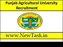 Punjab Agriculture University Ludhiana  Recruitment's 2019