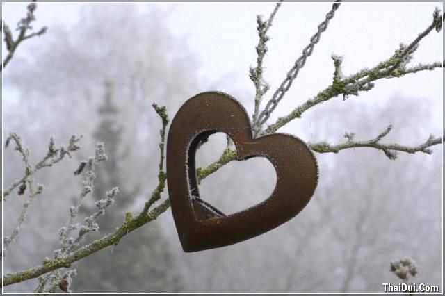 ảnh trái tim mùa đông