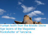 http://sciencythoughts.blogspot.com/2018/08/human-teeth-from-middle-stone-age.html