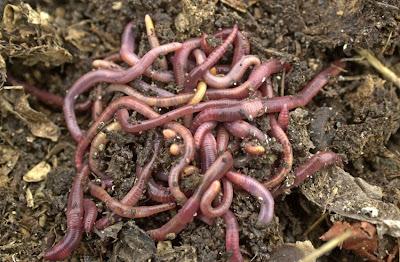 Soñar con gusanos ¿Que significa?