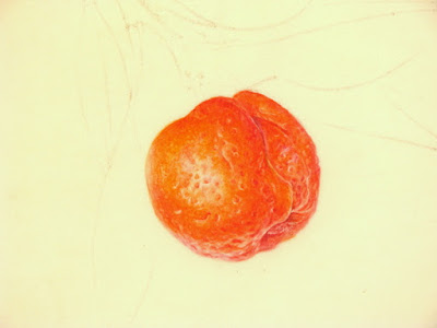Watercolour painting in progress of orange fruit on kelmscott vellum by Shevaun Doherty