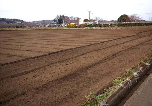 木屑を堆肥にしている畑