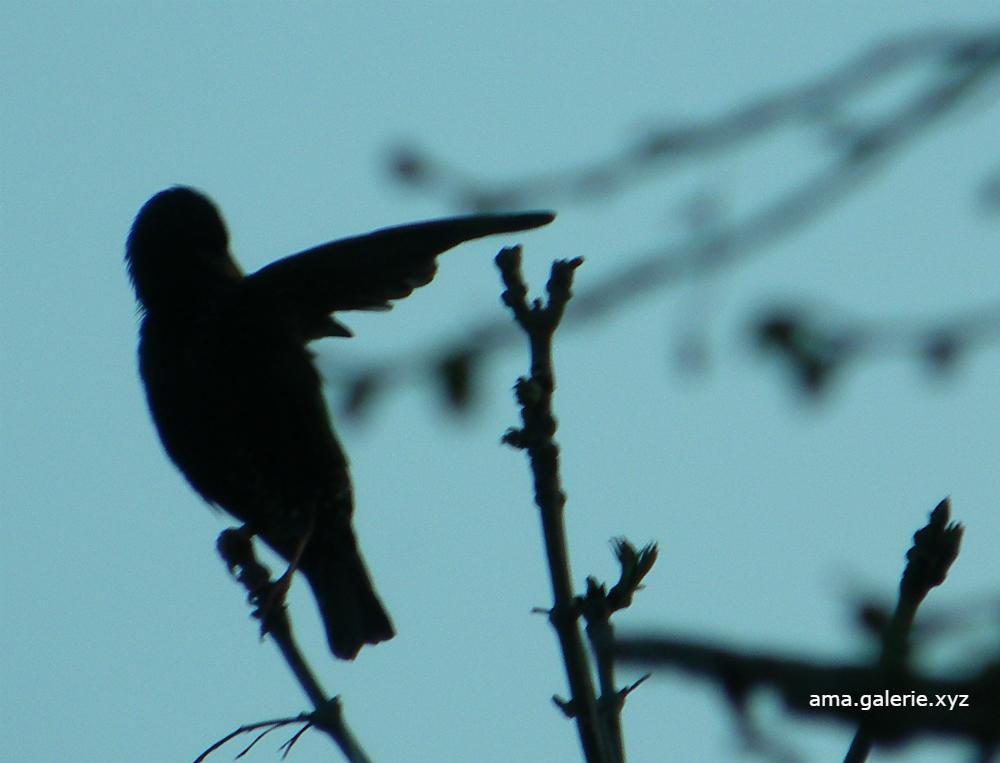 Drôles d'oiseaux par Ama sculptrice métal, alpes de haute- provence