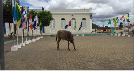 """Santanenses ironizam foto de jumento e dizem: """"desfile cívico em Santana do Ipanema"""""""