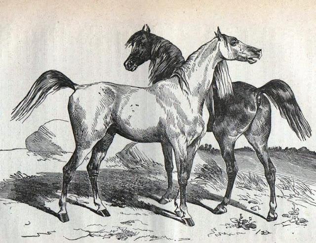 Dibujo publicado en Gaceta Agrícola del Ministerio de Fomento, 1881