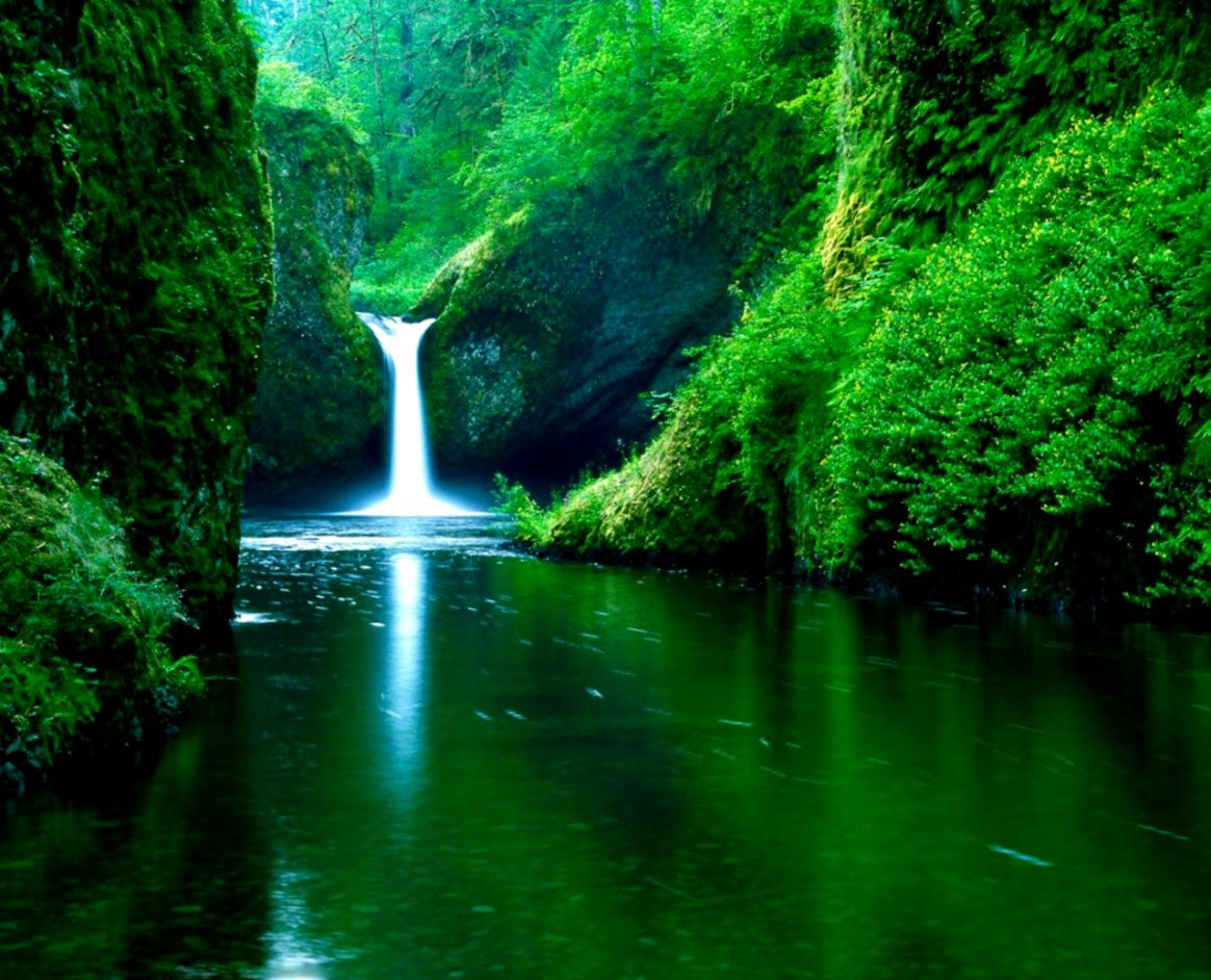 Nature Picture Green Pictures of Nnature