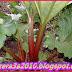 فوائد نبات الراوند