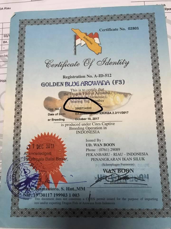 Gambar sertifikat arwana