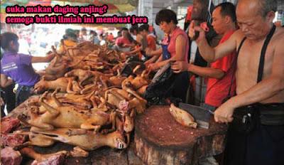 suka makan daging anjing? semoga bukti ilmiah ini beri efek jera