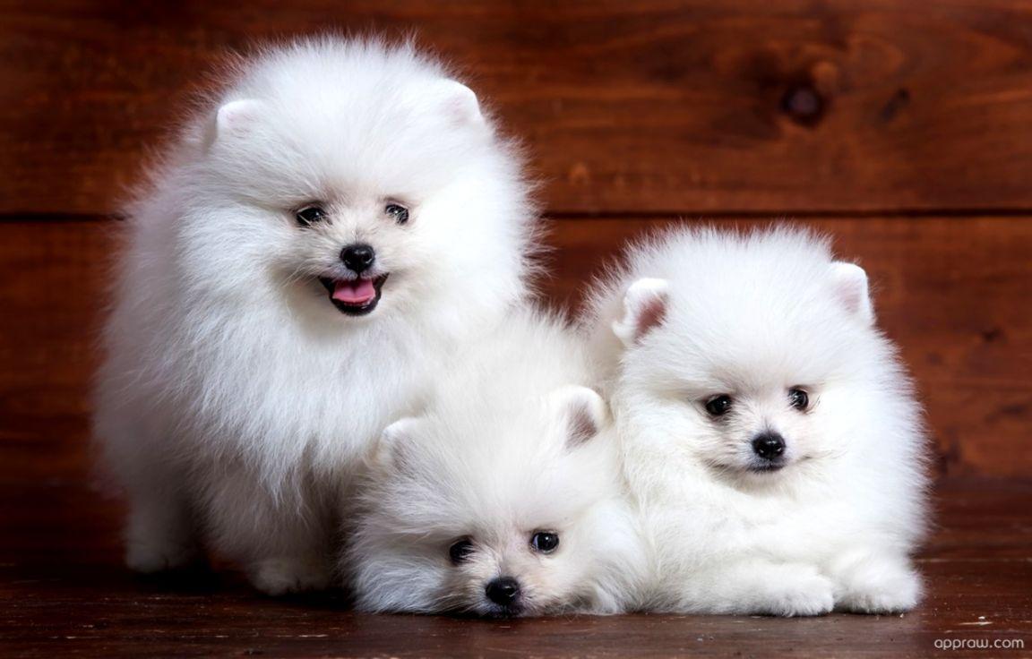 Cute Puppies Wallpaper Cute Wallpapers