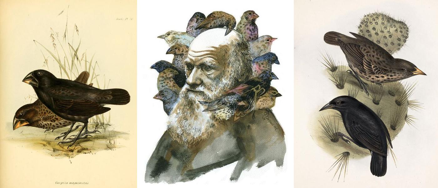 Darwin se popularizou também pelos tentilhões