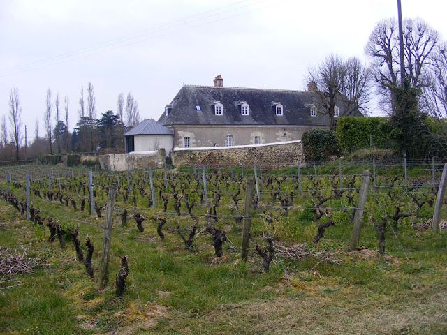Chateau Gaudrelle and vines Indre et Loire, France. Photographed by Susan Walter. Tour the Loire Valley with a classic car and a private guide.