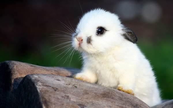anak-arnab-putih-comel