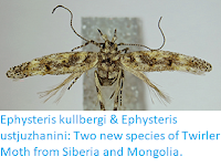 https://sciencythoughts.blogspot.com/2018/04/ephysteris-kullbergi-ephysteris.html