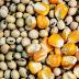 DowDuPont anuncia nova marca de sementes no Brasil BREVANT