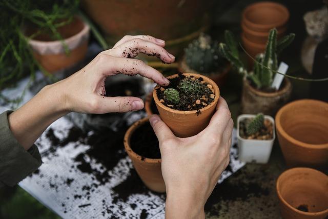 cactus-plantar