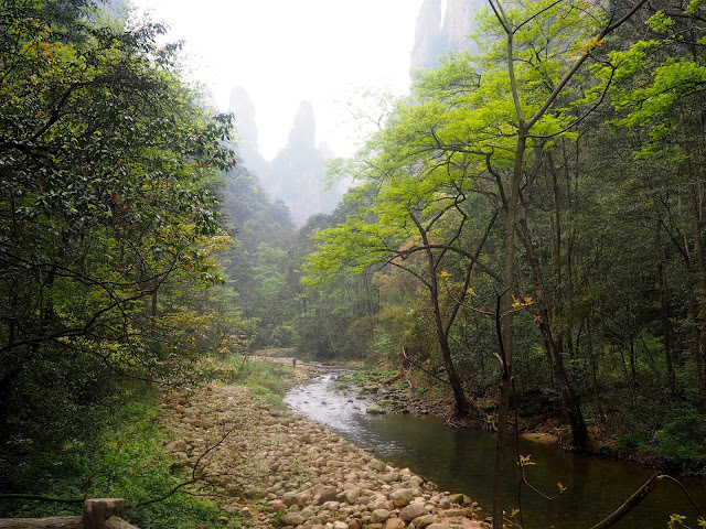 Golden Whip Stream area of Zhangjiajie National Park, China