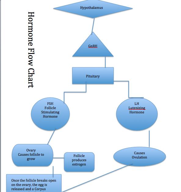 Beef Steer Diagram Animal Science Journal Hormone Flow Chart