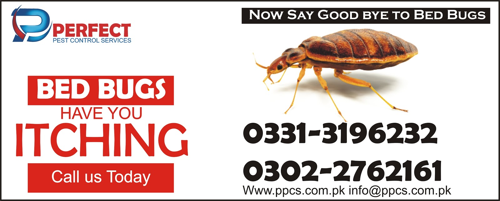 Perfect Pest Control Services Termite Proofing Treatment Bedbugs Treatment Cockroach Treatment