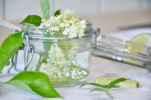 Kwiaty czarnego bzu zbiera się od maja do lipca. Baldachy warto zasuszyć (po ścięciu całych kwiatostanów można je rozłożyć na gazetę w suchym, ciepłym i przewiewnym miejscu), a potem parzyć herbatkę doskonałą na przeziębienie (wzmacnia odporność, działa moczopędnie, działa wykrztuśnie, rozrzedza katar, działa napotnie, ma działanie antywirusowe i wiele innych)