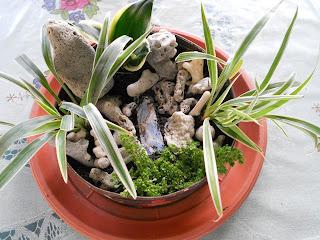 my miniature garden in a pot