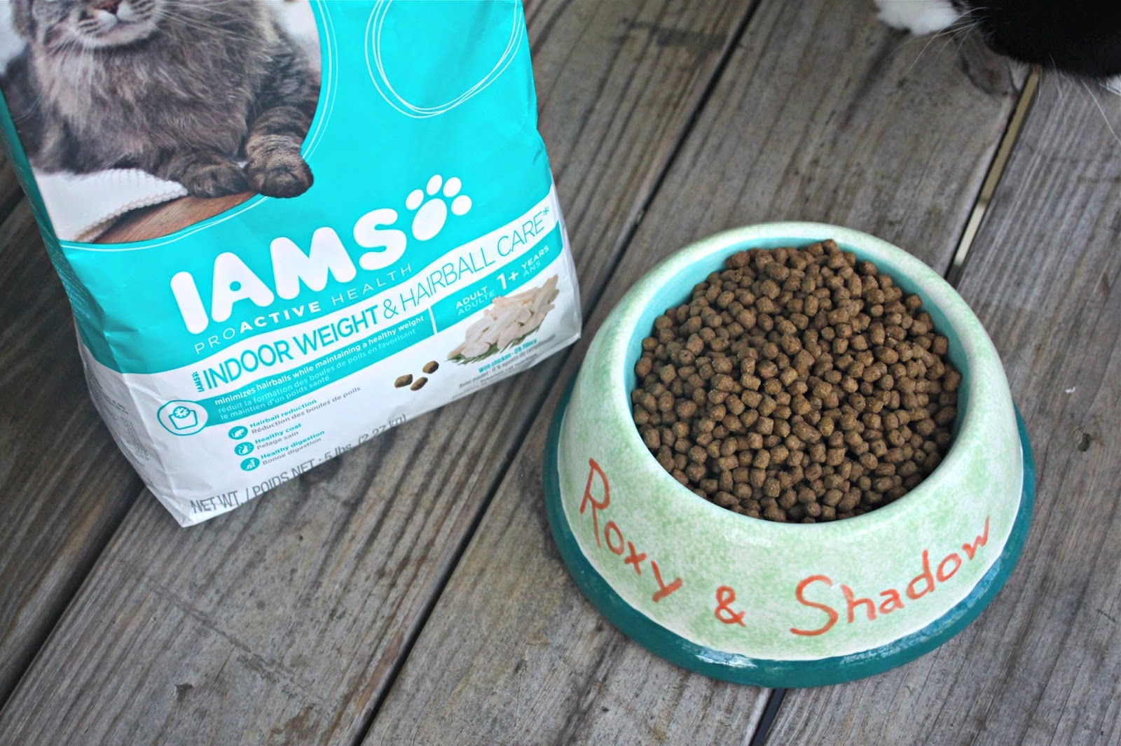 What Foods To Feed Shedding Cats