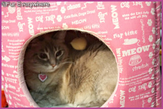 Milita's in the pink cube having a chat with Angel Jewel
