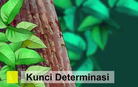 Cara Identifikasi Makhluk Hidup dengan Kunci Determinasi-Dikotomi
