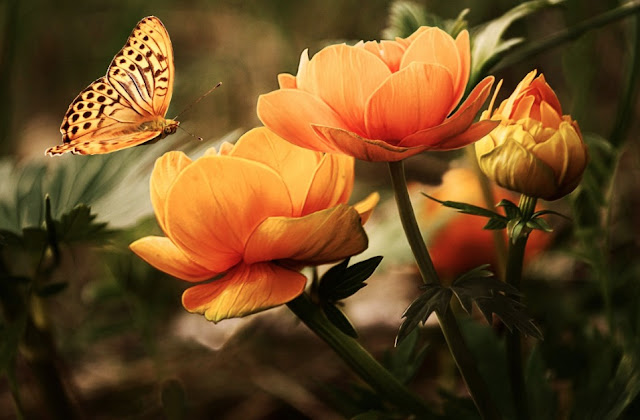 How To Lure Butterfly And Moth Come To Your Garden