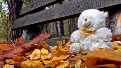 white-teddy-bear-sitting-on-leaves