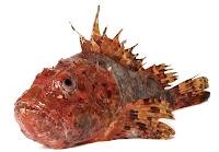 İskorpit balığının görünüşü